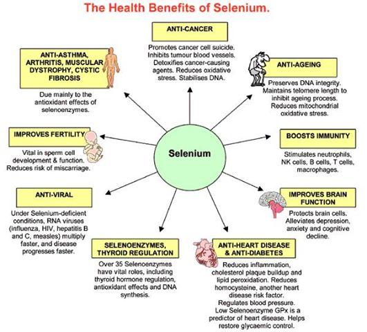 Health Benefits of Selenium | ENCYCLOPEDIA OF FOOD FOR ...